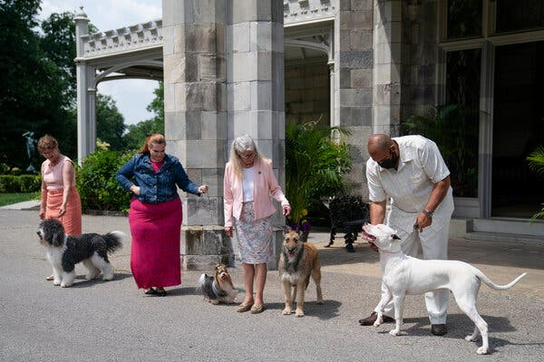 From left, a barbet, Biewer terrier, Belgian Laekenois and Dogo Argentino made their debuts this week.
